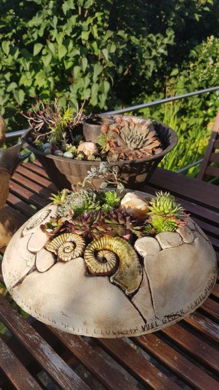 die Pflanzenschale ist ca. 28 cm im D und ca. 10 cm hoch